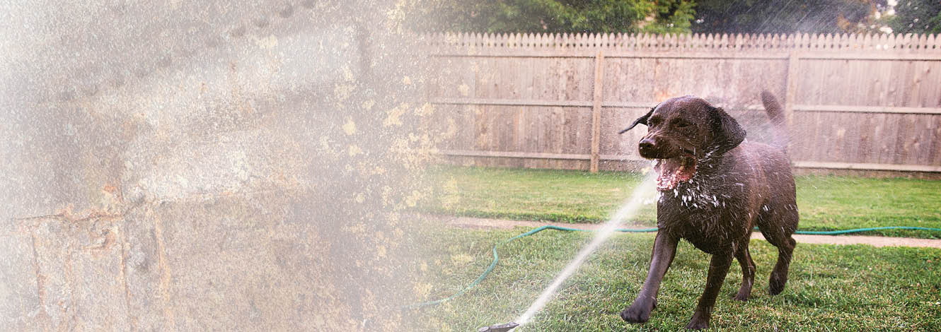 dog getting sprayed in the mouth with sprinkler hero image