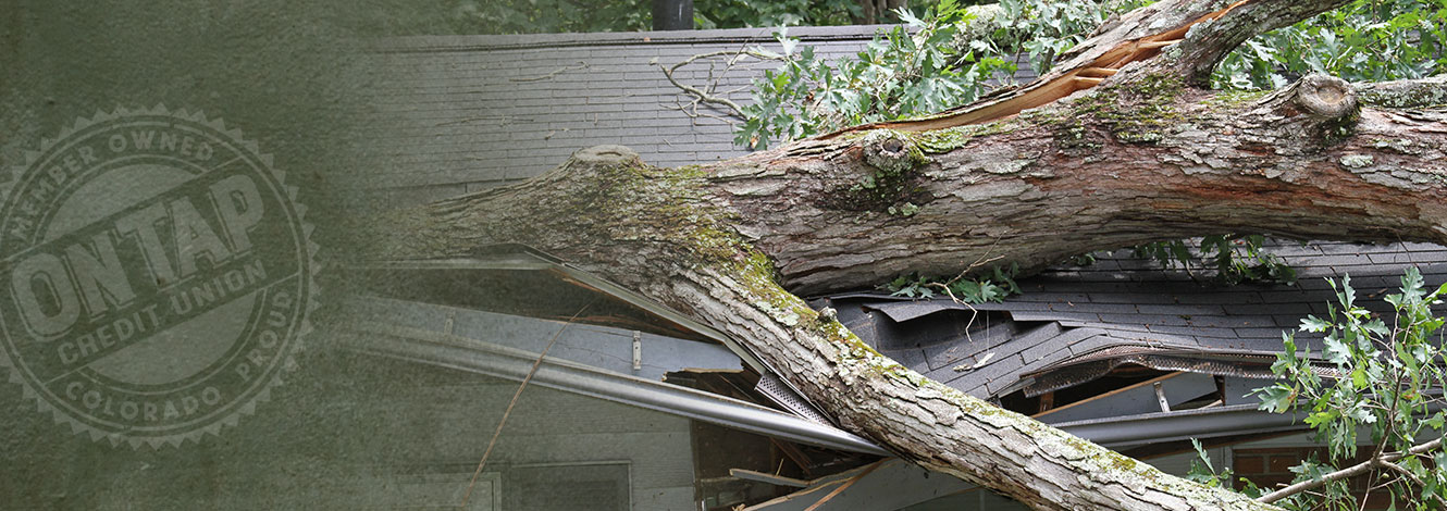 photo of tree that fell on house
